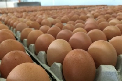 cliose up of eggs in factory