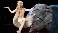 Female performer sitting on elephant trunk at circus