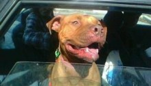 dog looking happy on way home after court case win