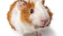 Banning animal testing for cosmetics